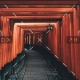 demo-attachment-58-tianshu-liu-395929-unsplash